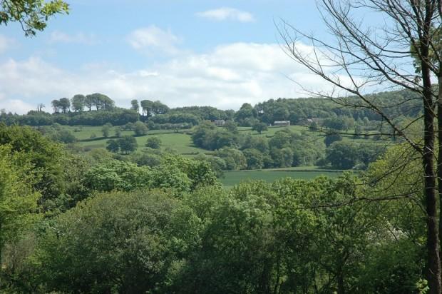 Looking towards Chedington Village from Soth Perrott.