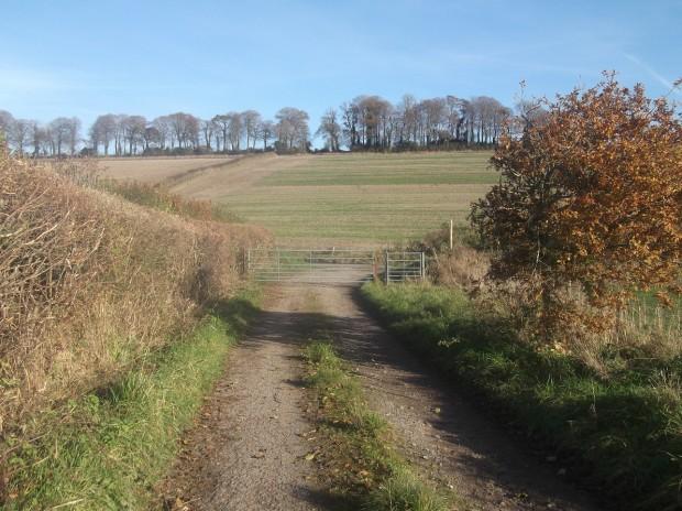 ibberton walk 013 - Copy