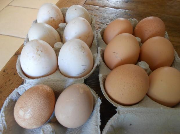 fresh eggs and Compton Abbas 006 - Copy